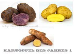 Edition KARTOFFEL DES JAHRES 1