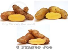 3 FINGER JOE